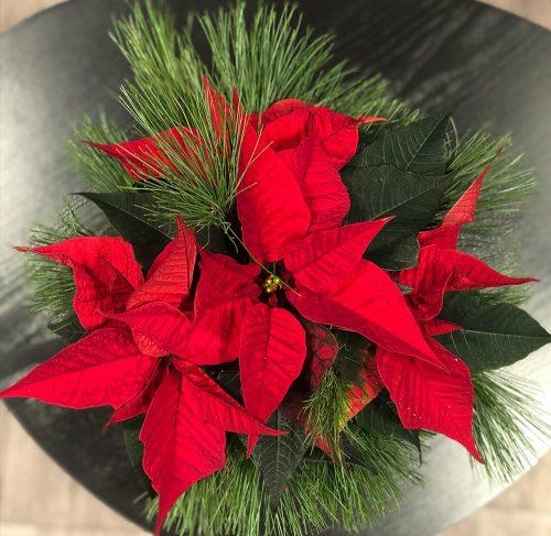 Weihnachtsstern in Rot mit Kiefer - Draufsicht