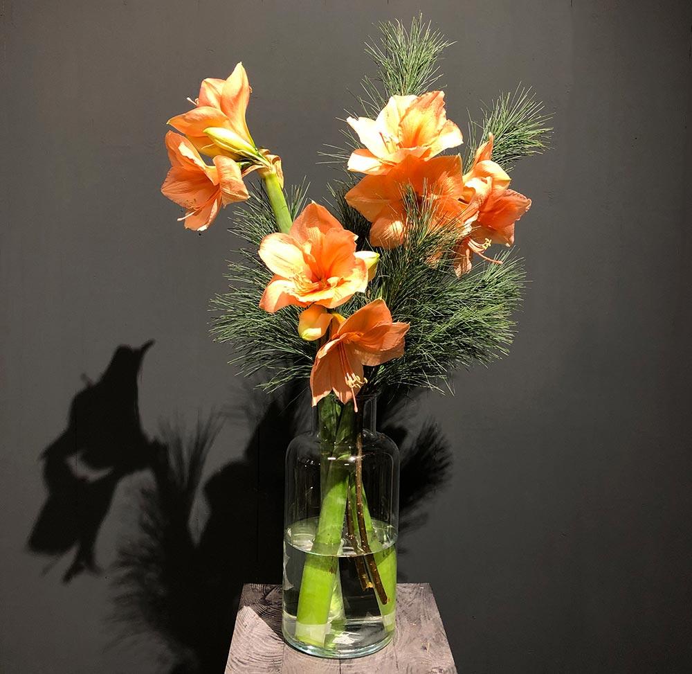 Langstielige Amaryllis peach